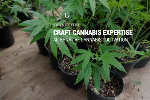 The Ganjier: Cannabis expertise