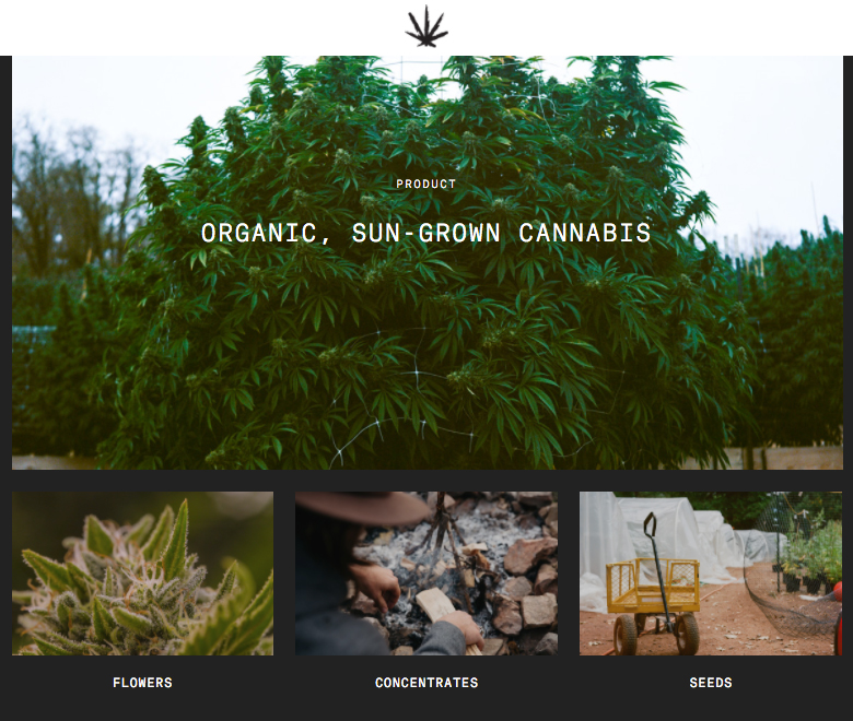 rebel grown products